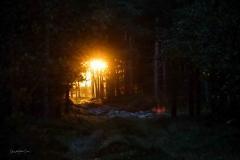 Besøg-hos-Thorbjørn_1220
