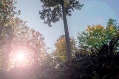 Efterår-2018_0163-HDR
