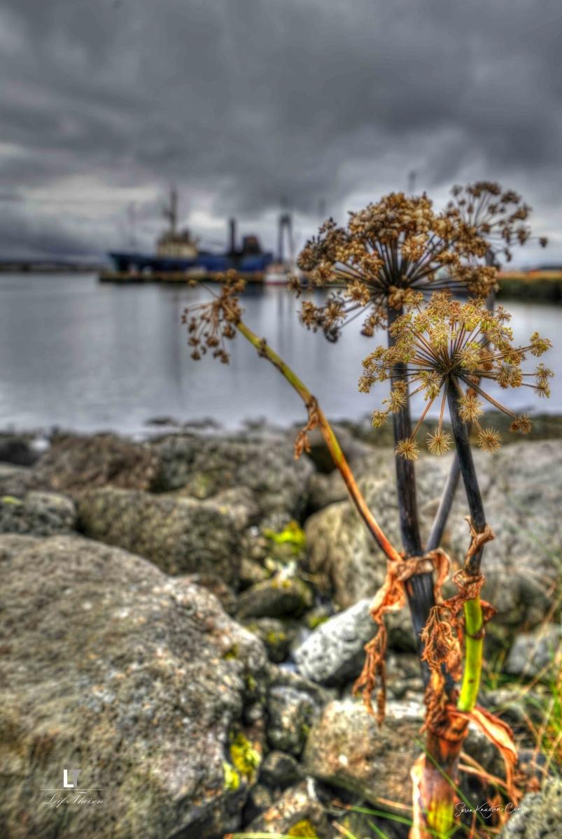 havnen-Keflavik
