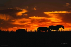 Soldnedgang-heste